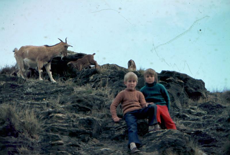 Nannee goat and a few kids, Kelvin Heights 1974