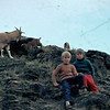 Nannee goat and a few kids, Kelvin Heights 1974