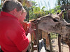Ken and Matthew feeding a giraffe, Lowery Park Zoo, Tampa, 3/16/2013
