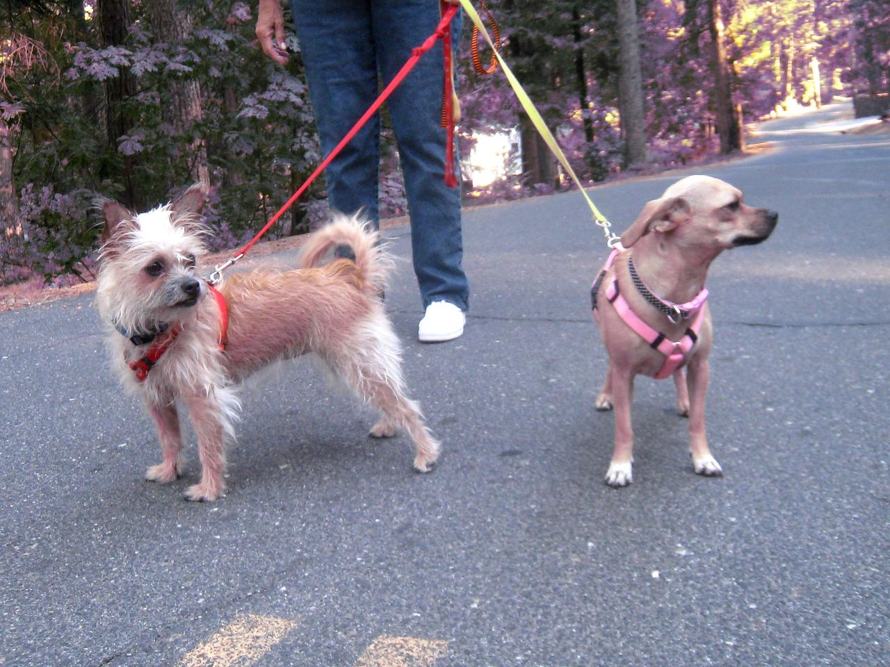 Janene's Doggie Friends 002