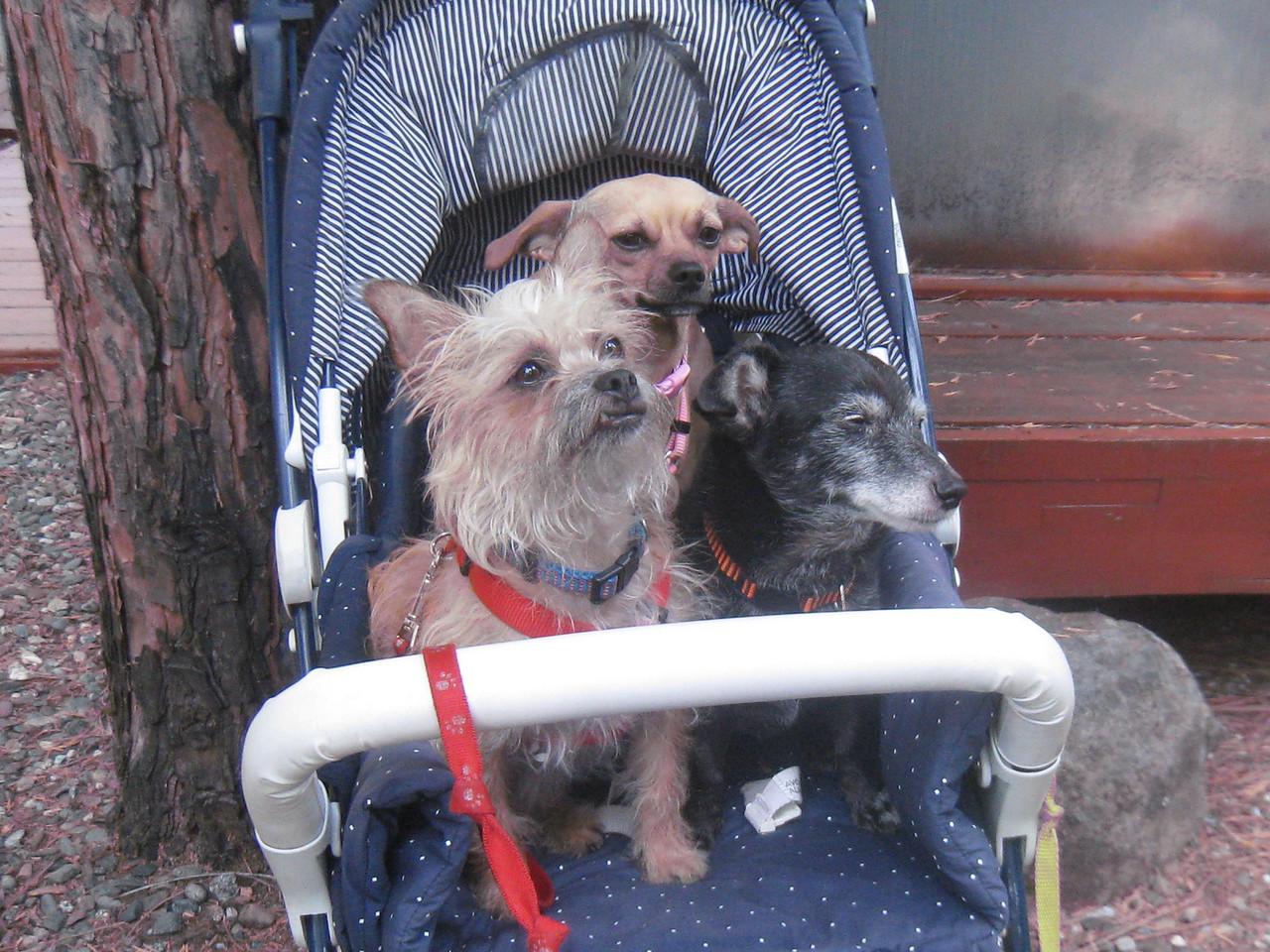 Janene's Doggie Friends 006