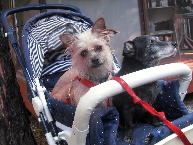 Janene's Doggie Friends 008
