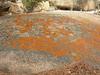Pretty orange lichen growing on granite at Vedauwoo.