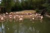 Flamingos!  Pretty but smelly