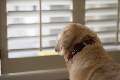 Samantha longing to go outside