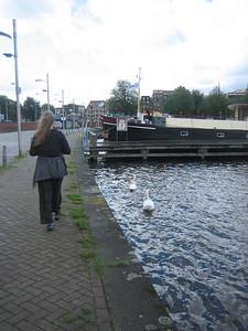 Swans in harbor
