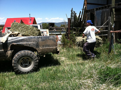Matt helped load two bales of Jean's sweet hay onto Carlos's truck.