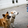 Street dog friends