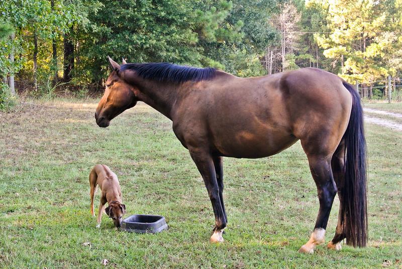 Jenny and Chad Farm Family 2015-107