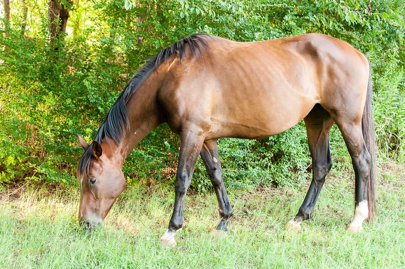 Jennys Horses-113