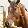 Jennys Horses-138