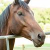 Jennys Horses-115