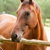 Jennys Horses-128