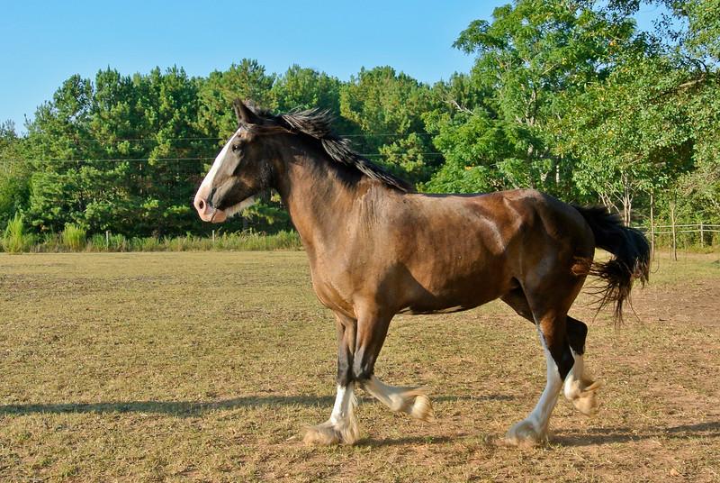 Jennys Horses-100