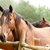 Jennys Horses-124