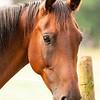 Jennys Horses-130