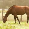Jennys Horses-137