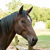 Jennys Horses-118