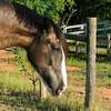 Jennys Horses-101