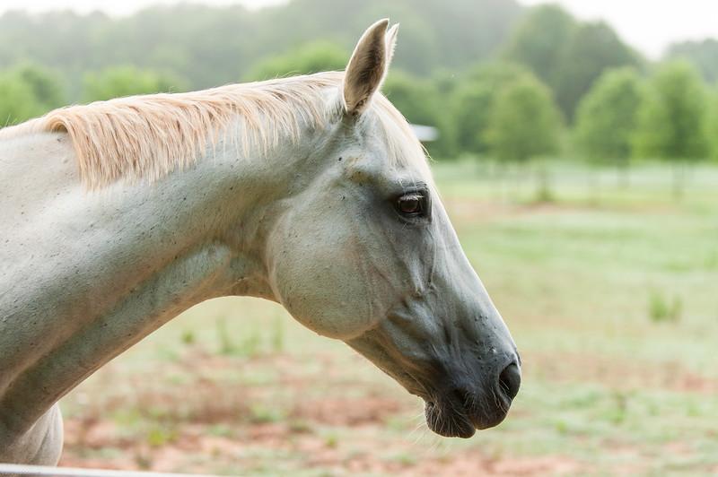 Jennys Horses-121