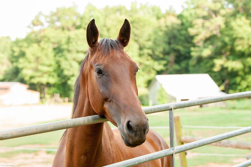 Jennys Horses-109