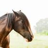 Jennys Horses-135