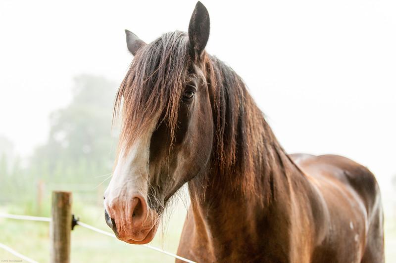 Jennys Horses-134