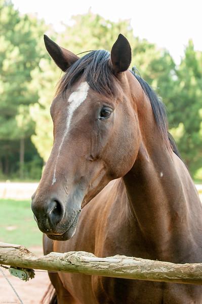 Jennys Horses-119