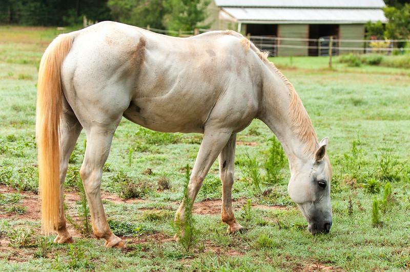 Jennys Horses-122