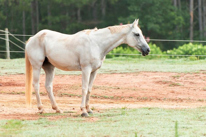Jennys Horses-120