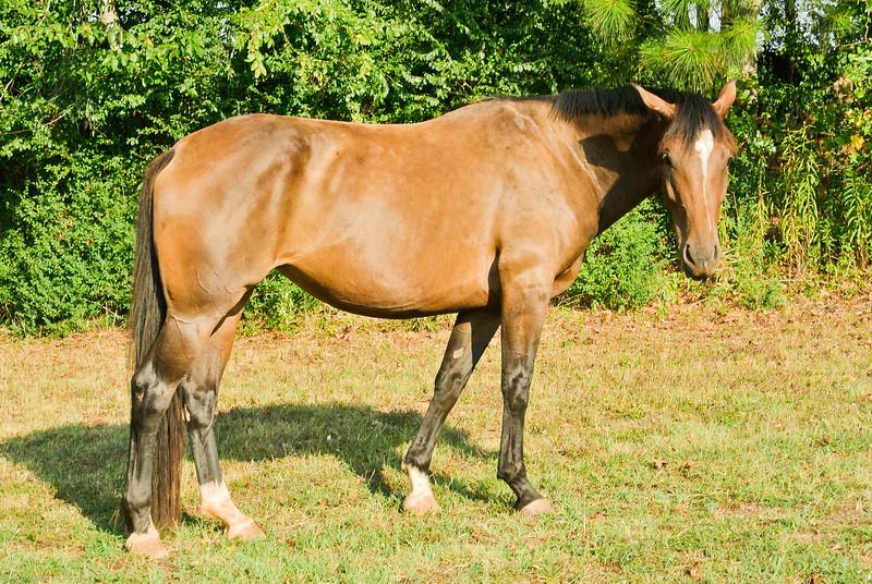 Jennys Horses-104