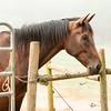 Jennys Horses-140