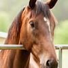 Jennys Horses-131