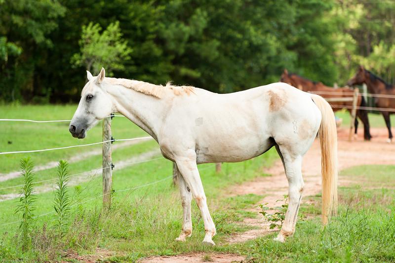 Jennys Horses-107
