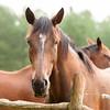 Jennys Horses-123
