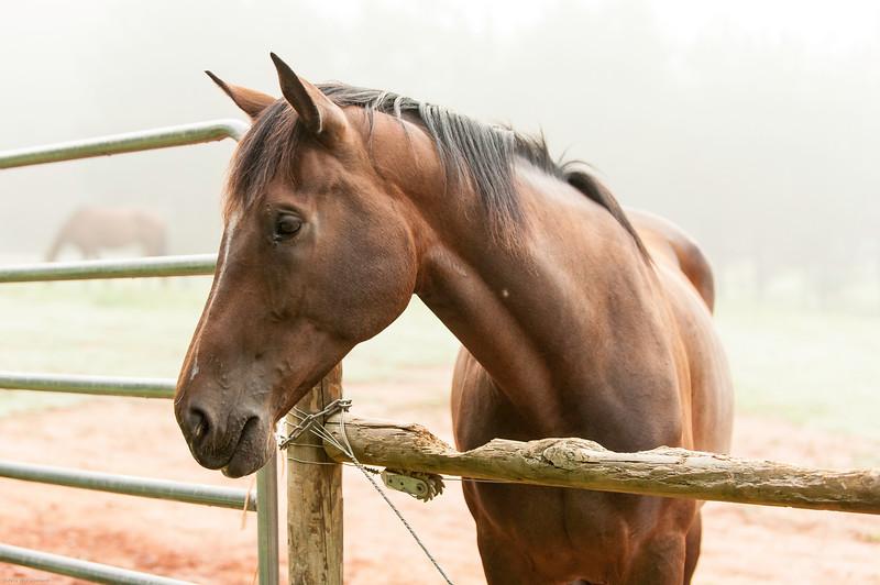 Jennys Horses-139