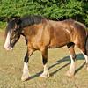 Jennys Horses-102