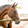 Jennys Horses-114