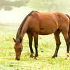 Jennys Horses-136