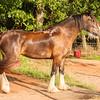 Jennys Horses-112