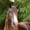 Jennys Horses-133