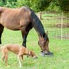 Jennys Horses-108