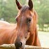 Jennys Horses-126
