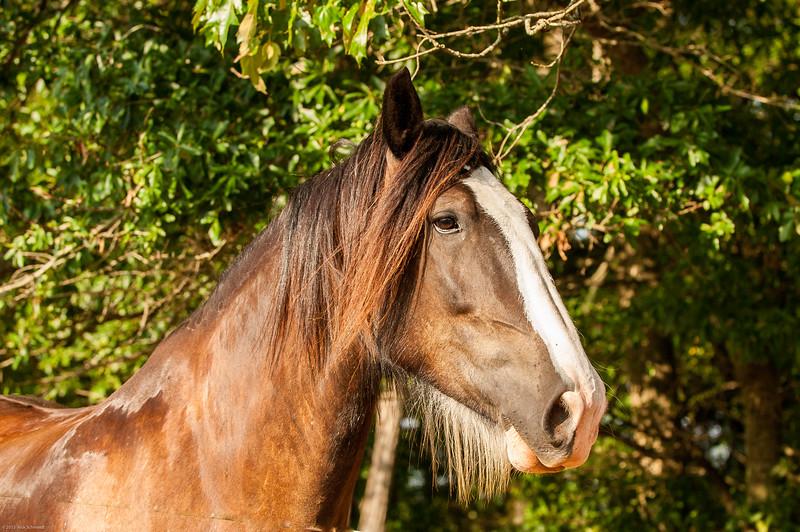 Jennys Horses-111