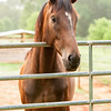 Jennys Horses-129