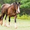 Jennys Horses-132