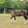 Jennys Horses-105