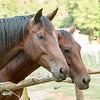 Jennys Horses-116