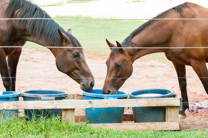 Jennys Horses-117