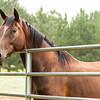 Jennys Horses-127